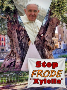 STOP FRODE ''XYLELLA'' - Ulivo simbolico in piazza Sant'Oronzo a Lecce. Papa Francesco