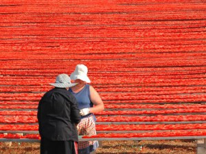 Ll'essiccazione dei pomodori a Felline